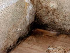 Schimmel in Wandecke, Fußboden, Tapeten, Parkett