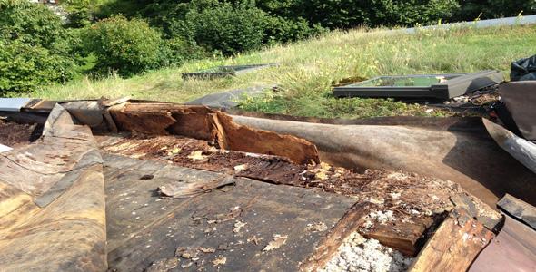 Holzzerstörung