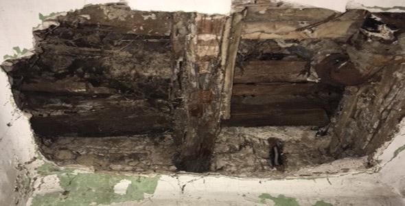 Myzell des Echten Hausschwamms